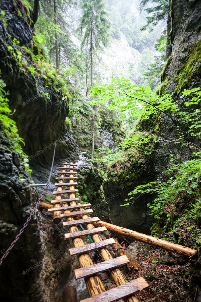 Abandoned old wooden bridge in rain forest