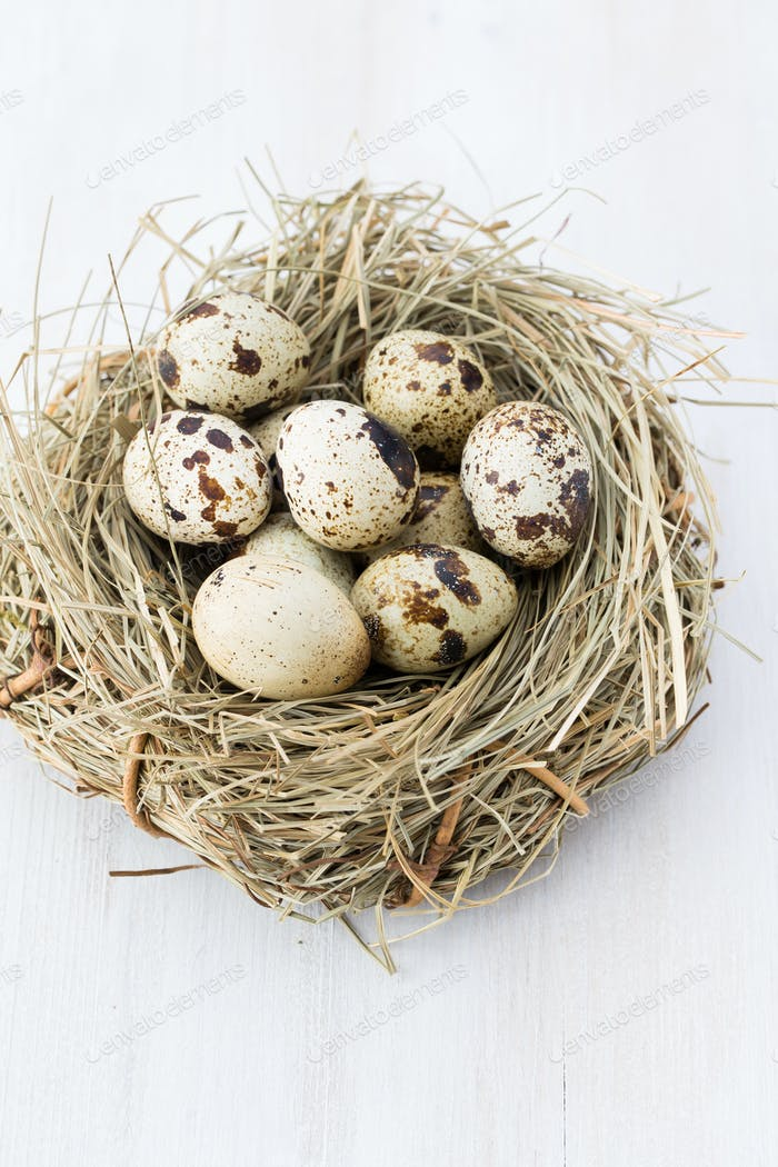 Quail eggs of birds nest. Easter composition.