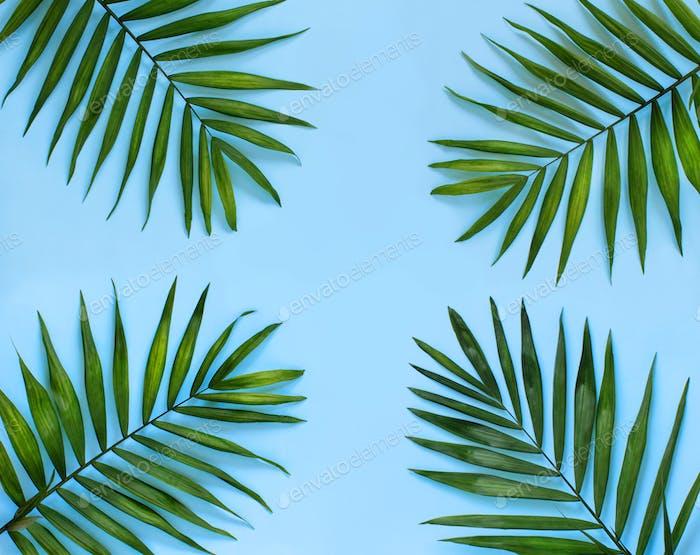 Palm leaf on a blue background