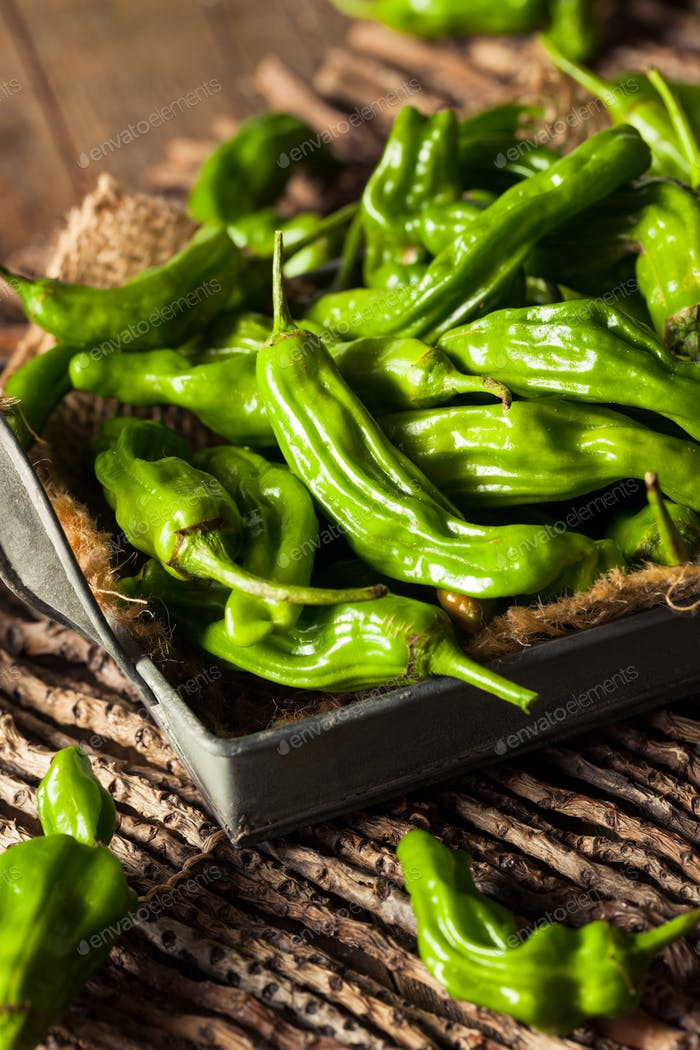 Raw Organic Green Shashito Peppers