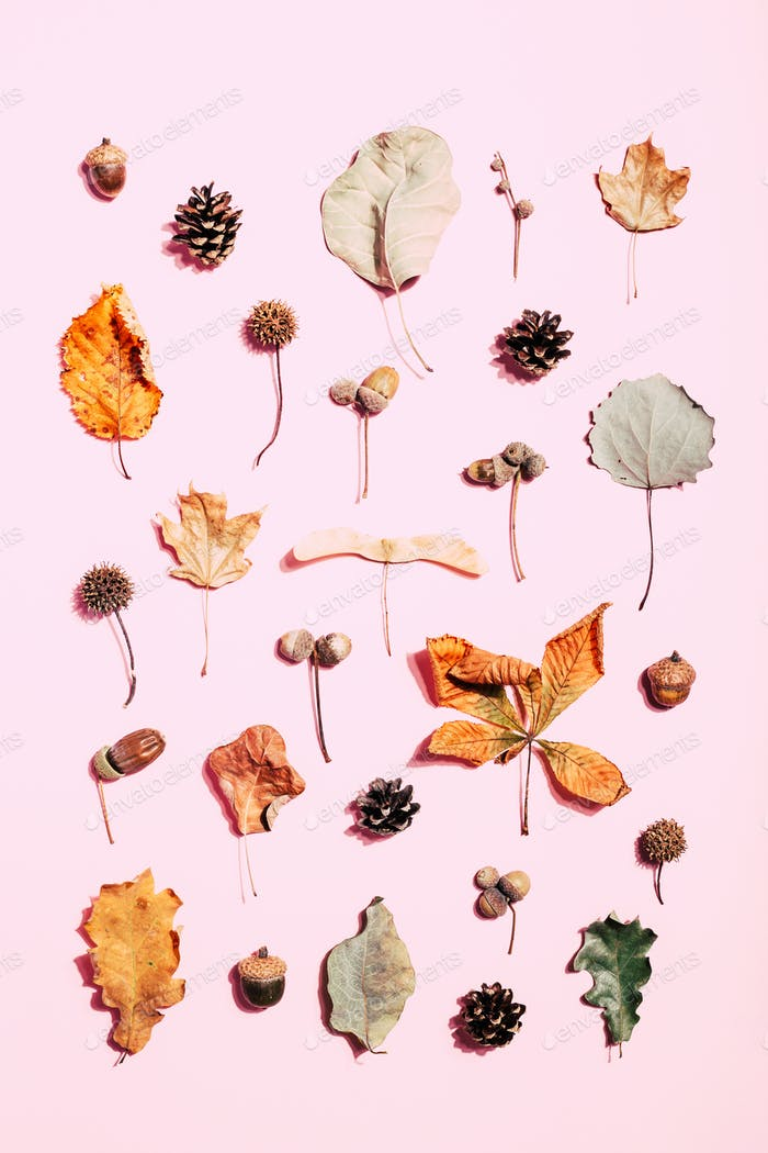 Autumn Pattern Made of Dry Leaves on Pink Background.
