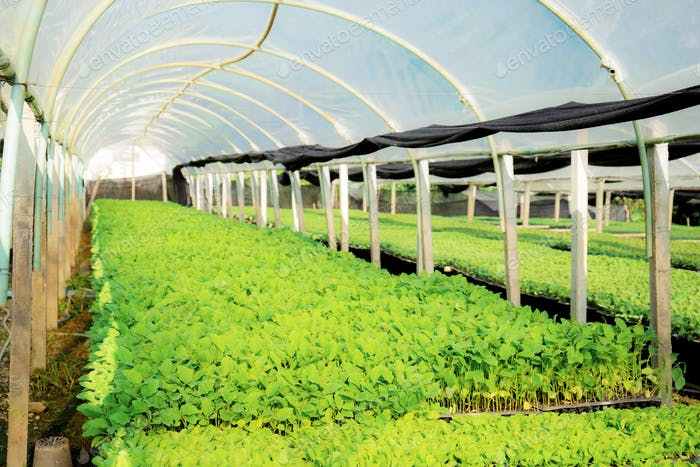 Organic vegetables in green house of Thailand