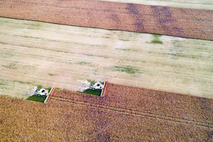 Ernte von Ölraps im Herbstfeld