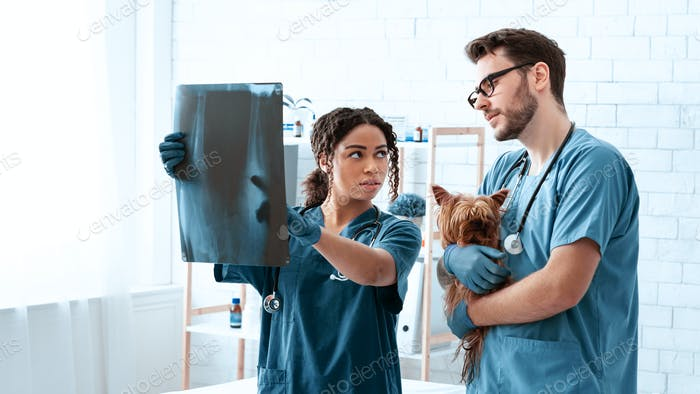 Radiography in veterinary practice. Vet doctors with xray and cute dog in animal clinic, copy space
