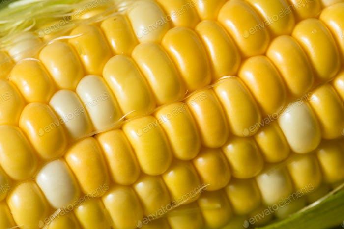 Rohe gelbe Mais auf der Cobb
