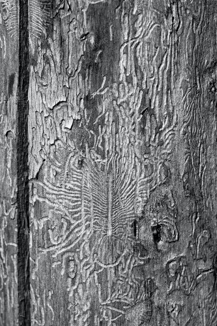 Drawing on tree
