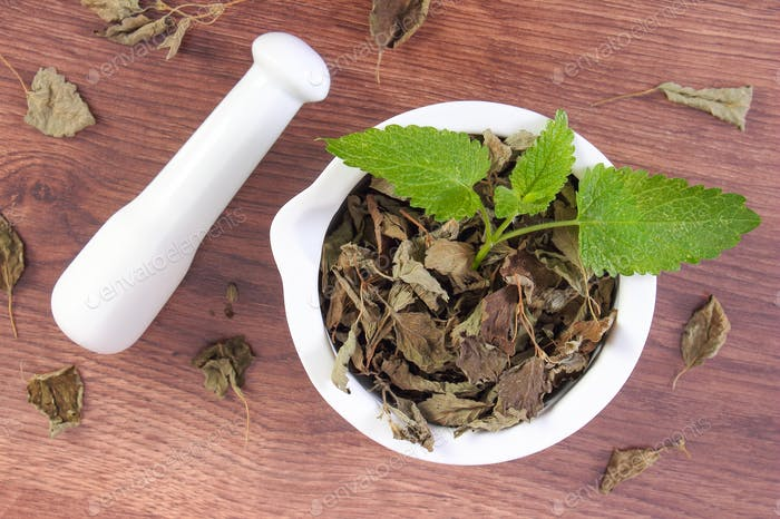 Green and dried lemon balm with mortar, concept of herbalism and alternative medicine