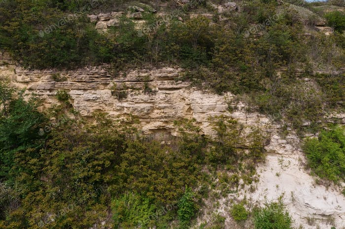 Top view of trees and rock texture