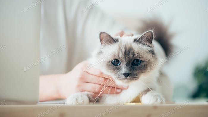 Woman caressing her beautiful cat