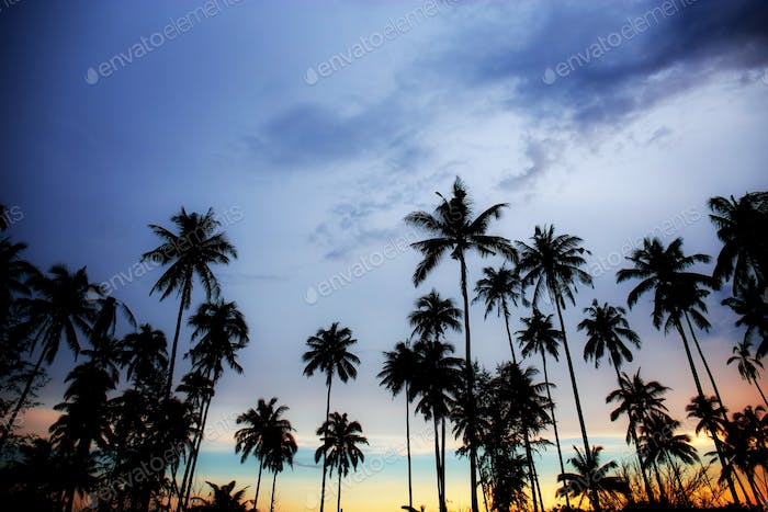 Palm tree with twilight at sky