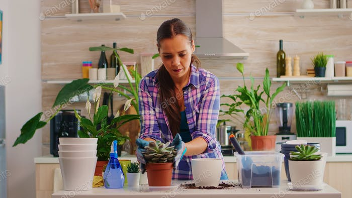 Woman replanting flowers in the kitchen