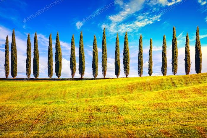 Toskana, Zypressenbäume Zeile Landschaft Landschaft, Italien, Europa.