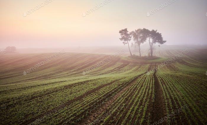 Scenic misty sunrise on a field.