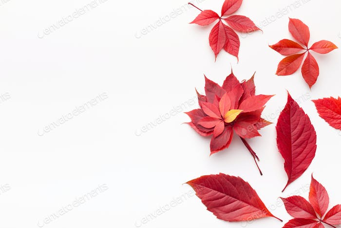 Flat lay of red fallen leaves on white background
