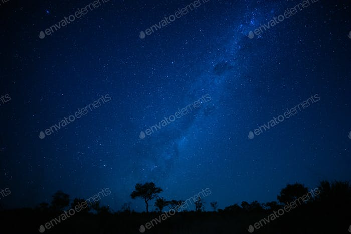 A landscape shot at night, silhouetted trees in the foreground and the Milky Way and stars in the