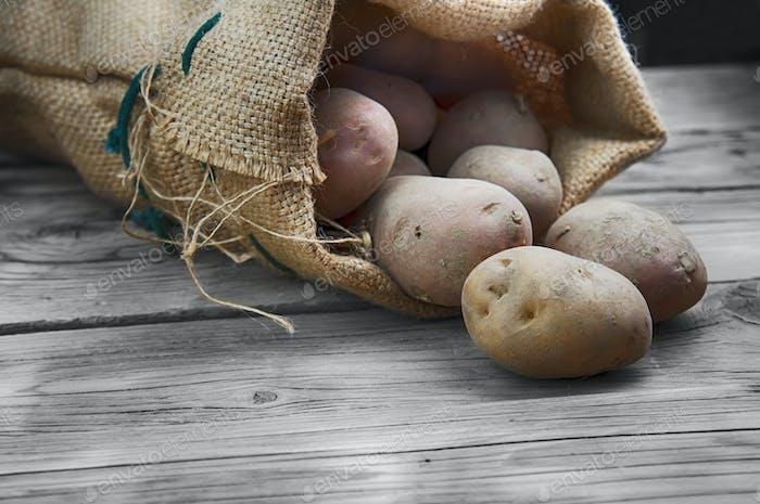harvest potatoes
