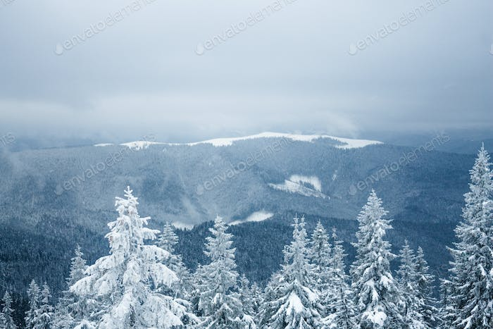 Aerial View of Winter Forest in Gorgany Mountains