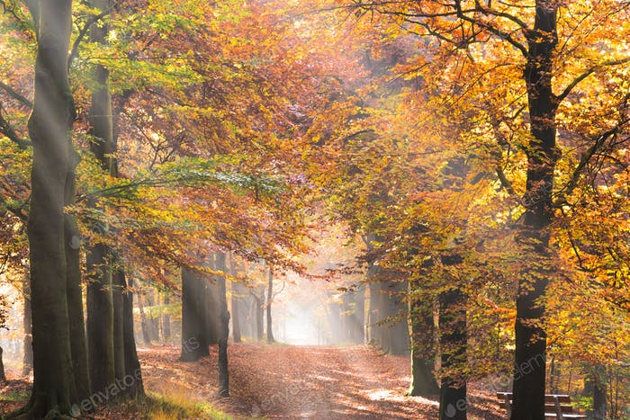 Sunbeams through the leaves in an autumn forest