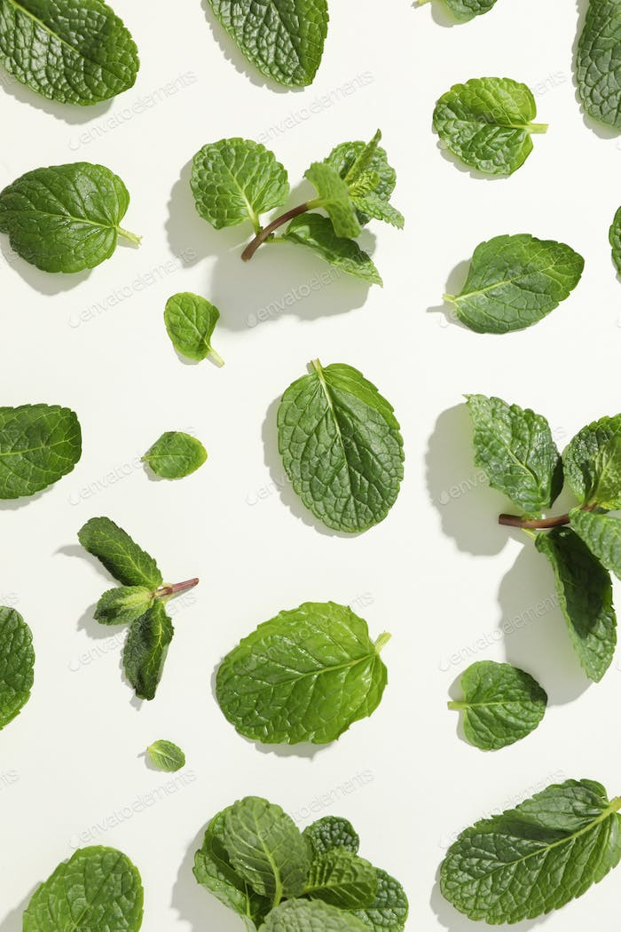 Fresh mint on white background, top view