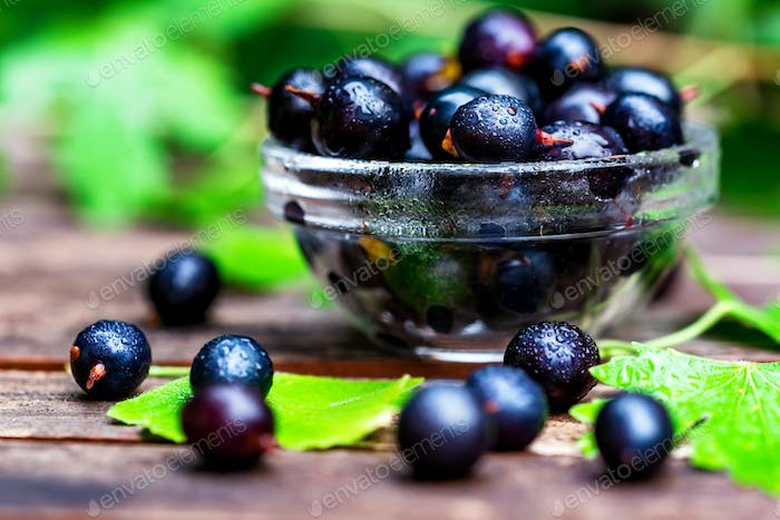 Ripe blackcurrant in glass bowl close