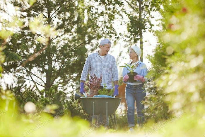 Seniorenpaar im Familiengarten