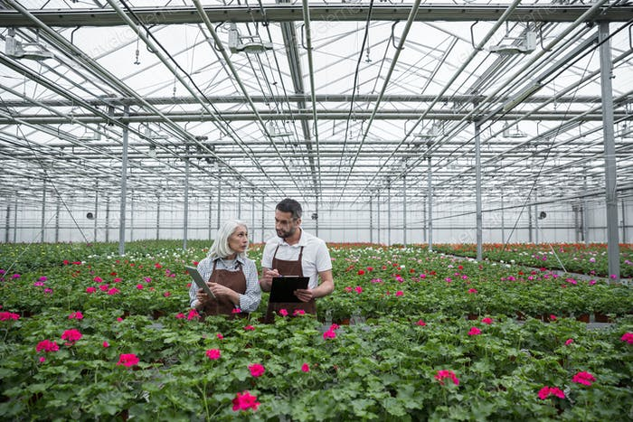 Serious man standing in greenhouse near mature woman