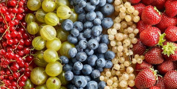 various berries background