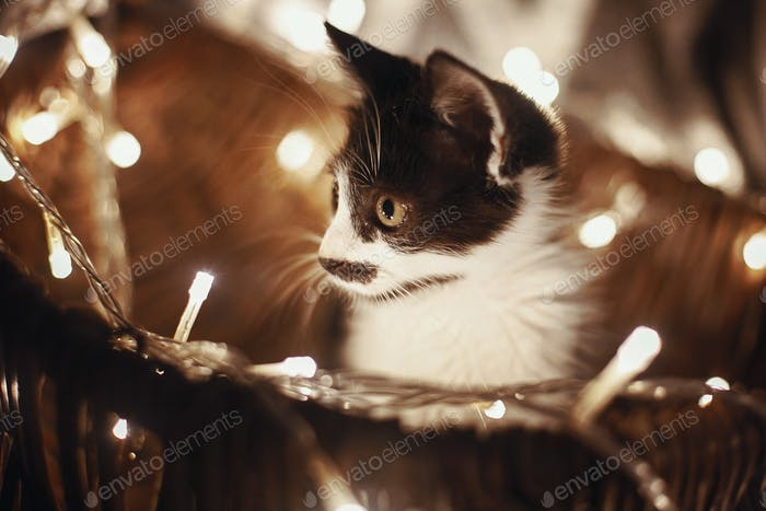 Cute kitty sitting in basket with garland lights under christmas tree in rustic room