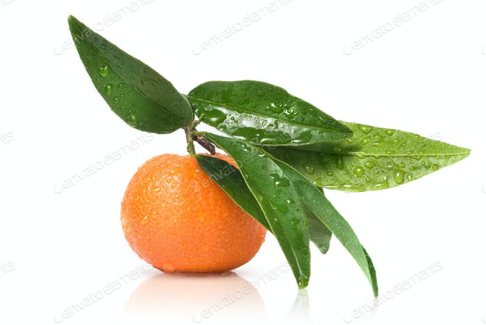 Tangerine with green leaves and water drops isolated on white