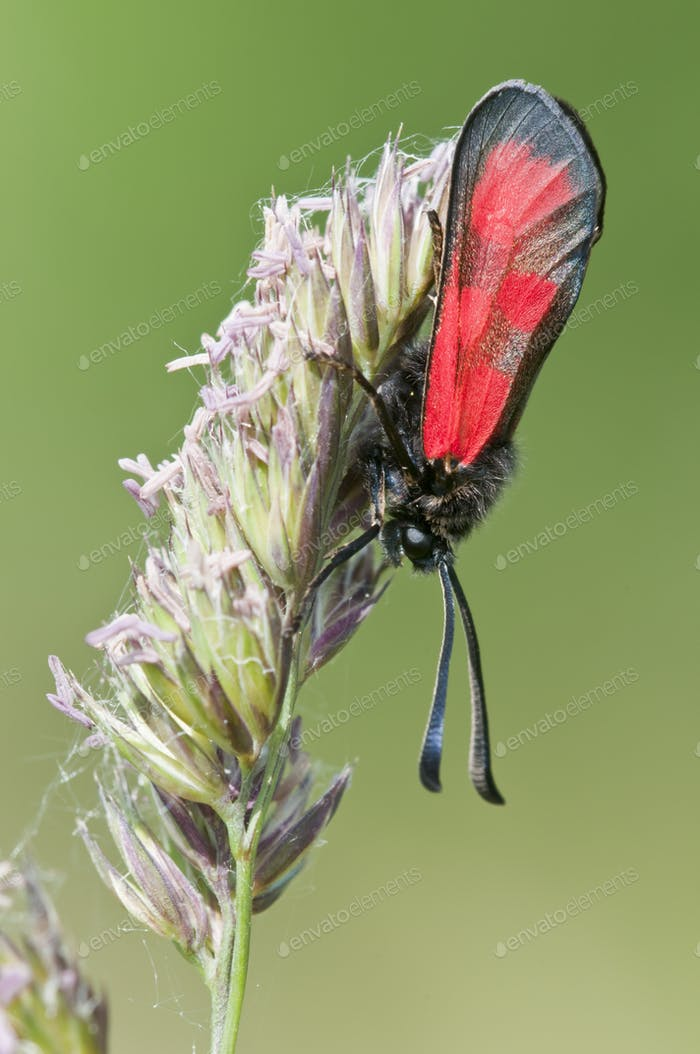 Red Butterfly on Green Spike