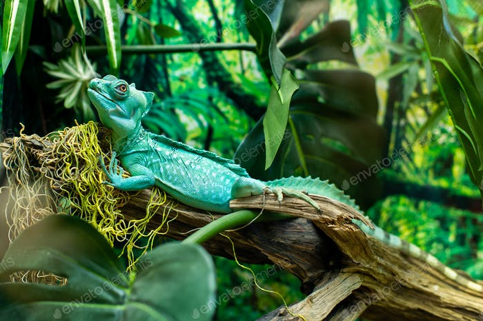 Close-up shot of a turquoise iguana sitting on a branch with a blurry background