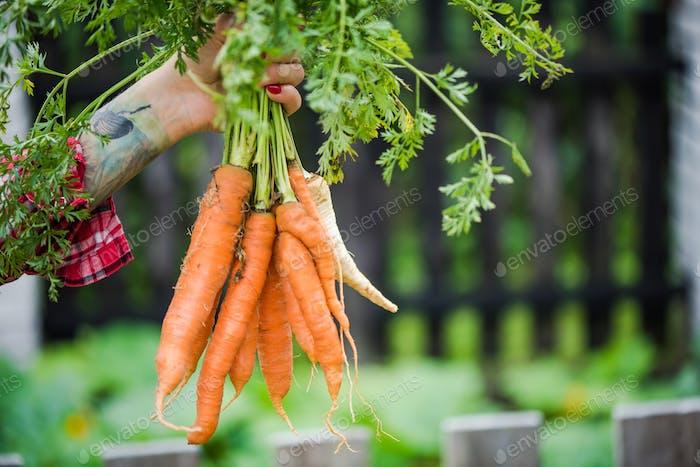 Tattooed millennials woman holding carrot in garden