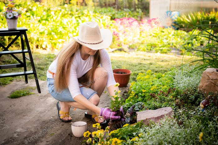 Woman gardener transplanting flowers from pot into wet soil after watering it with watering can