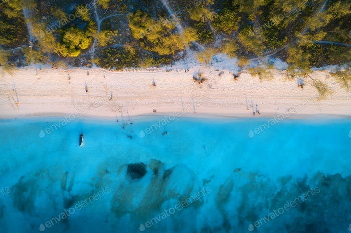 Aerial view of green trees on the sandy beach and blue sea