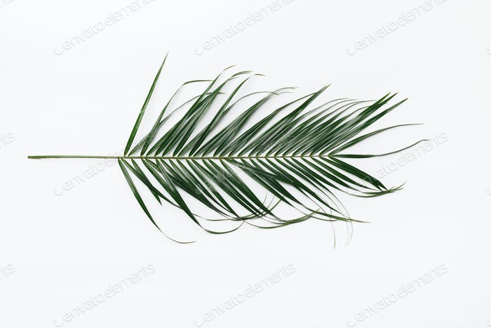 Creative layout made of green tropical leafe on white