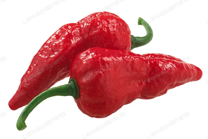 Bhut Jolokia ghost chili peppers (Capsicum frutescens x Capsicum chinense hybrid),  isolated