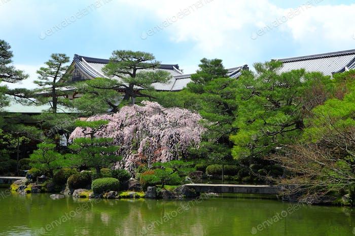 Tropischer Garten mit Pavillon im japanischen Stil