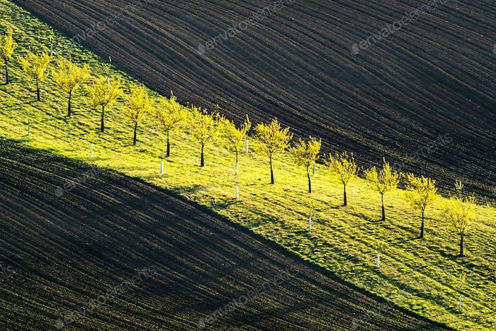 Grüne und braune Wellen der landwirtschaftlichen Felder