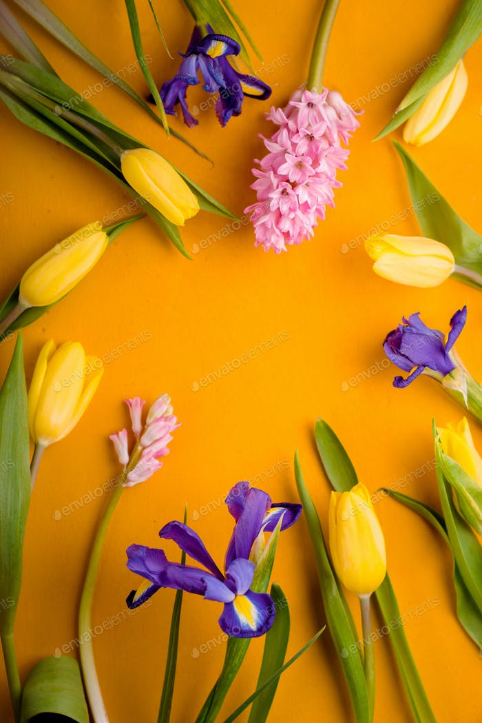 Frame of tulips, irises on a yellow background