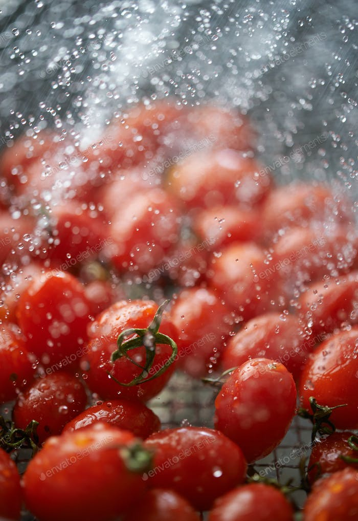 Close-up view of red ripe tomatoes while cleaning