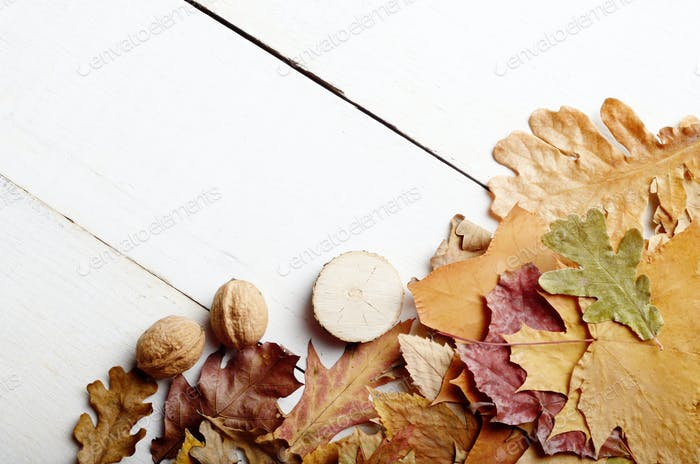 High angle shot of dry maple and oak leaves with nuts on white w