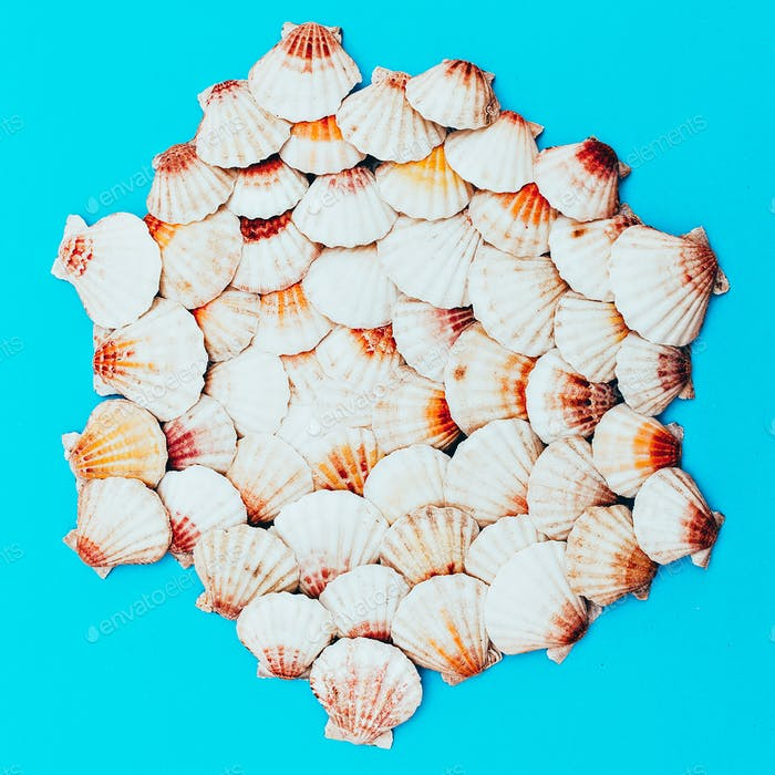 Seashells background. Beach mood. Minimal art