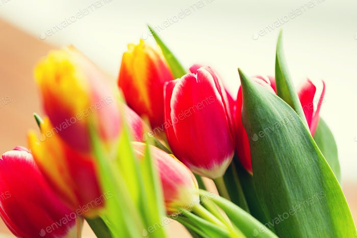 close up of tulip flowers