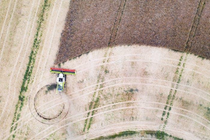 Harvesting oilseed rape in autumn field