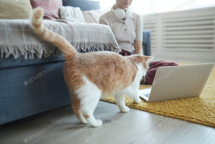 Cat trying to play with laptop
