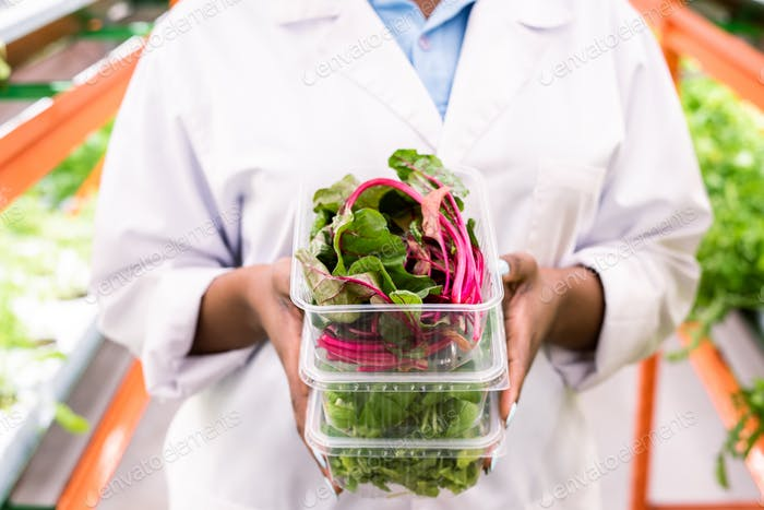 Fresh beet leaves in plastic container on top of stack held by young agronomist