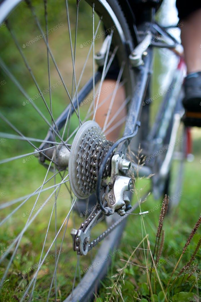 biking - rear wheel of a young woman's mountain bike on a green
