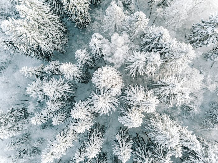 Aerial view of winter forest covered with snow, view from above.