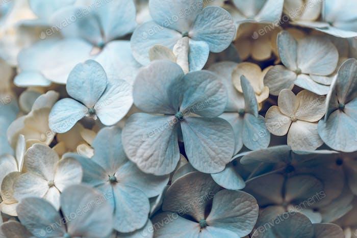 Pastel Flower Background