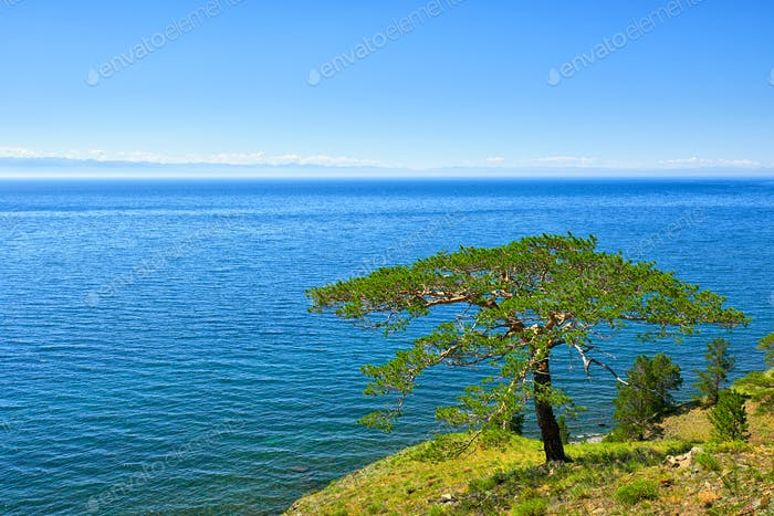 Tree on shore of Lake Baikal